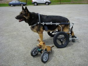 dog wheel chair ahlf gs x