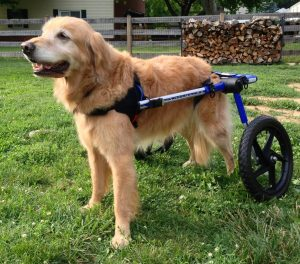 dog wheel chair bailey wheelchair