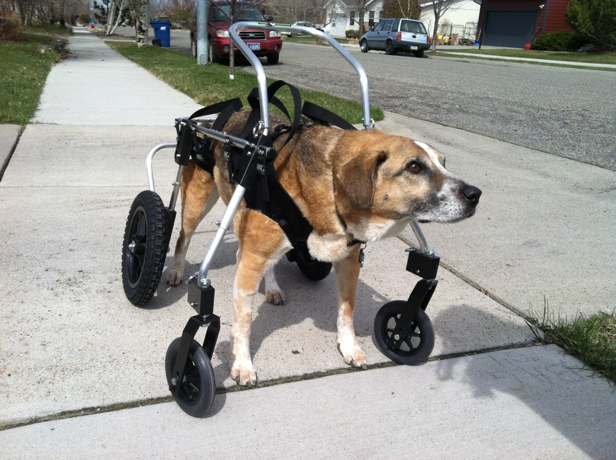 dog wheel chair img x