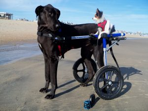 dog wheel chair long john hunter rider