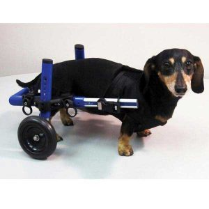 dog wheel chair wheelchair alt